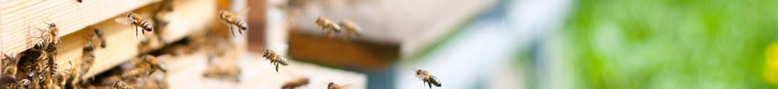 ampiaiset