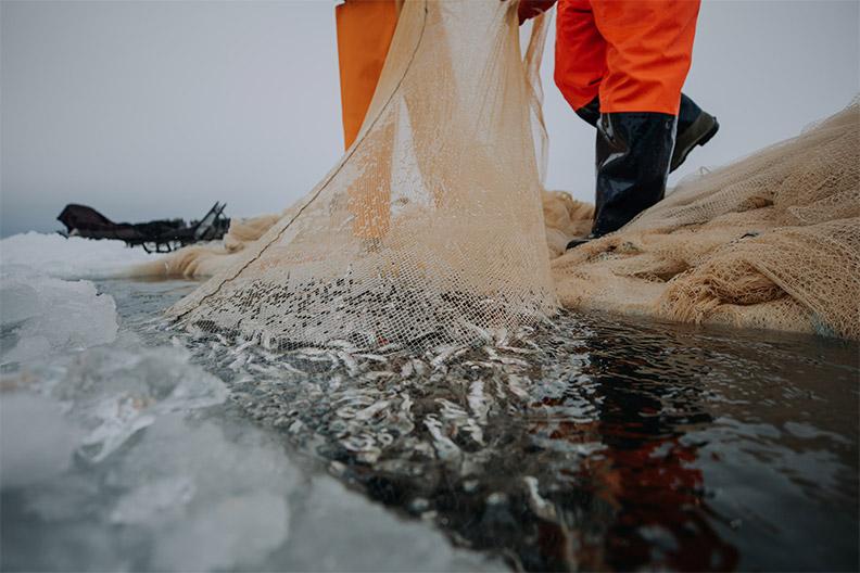 Kuvassa muikun pyyntiä talvikalastuksella ja avannosta nostetaan juuri muikkusaalista nuotassa. Kestävän sisävesikalastuksen kehittäminen on yksi Etelä-Savon ruoka-alan kehittämiskohde. Kuva: Julia Kivelä/aitojamakuja